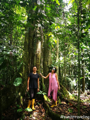 亞馬遜叢林