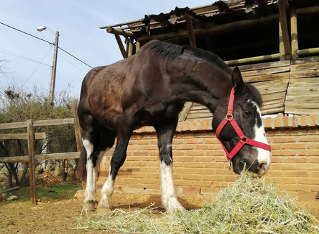 生活在智利的馬場 Life Of A Ranch In Valparaiso
