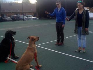 Does My Dog Understand Me?- Human Psychology V.S. Dog Psychology – Part 2