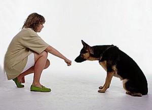 How Children Greet Dogs