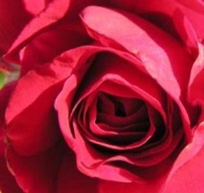 Rose%252520coeur%252520rouge_edited_edit