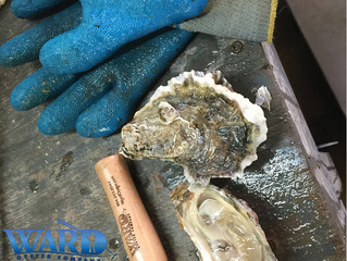 Wine & Brine Lounge 4/8: Meet Ward Oyster Company