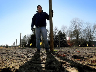 The Williamsburg Winery Expands, Plants New Vineyards