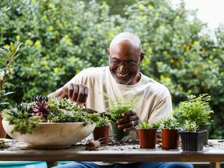 The Air Quality Garden