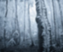 Frosted-Trees-Jan-Bainar.jpg