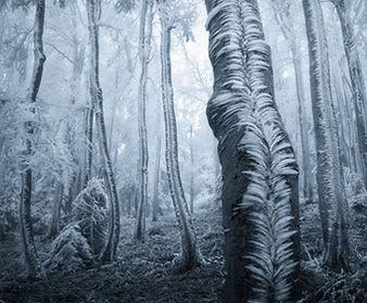 Frosted-Trees-Jan-Bainar.jpg