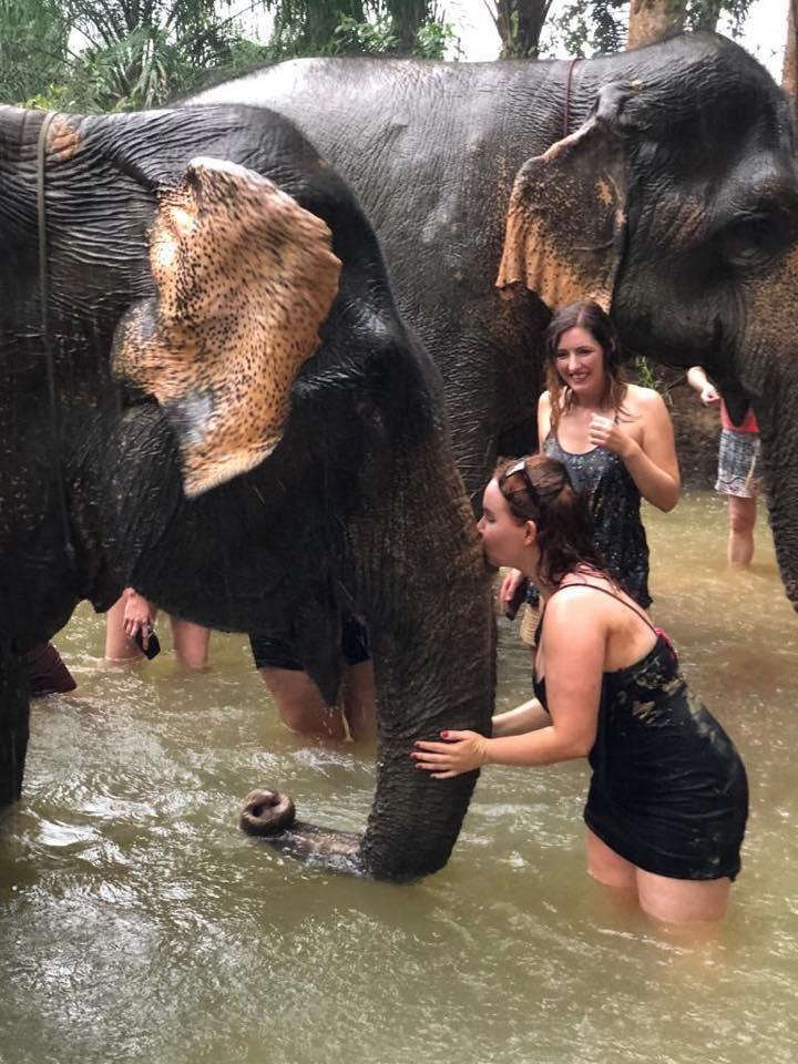 Meeting Elephants