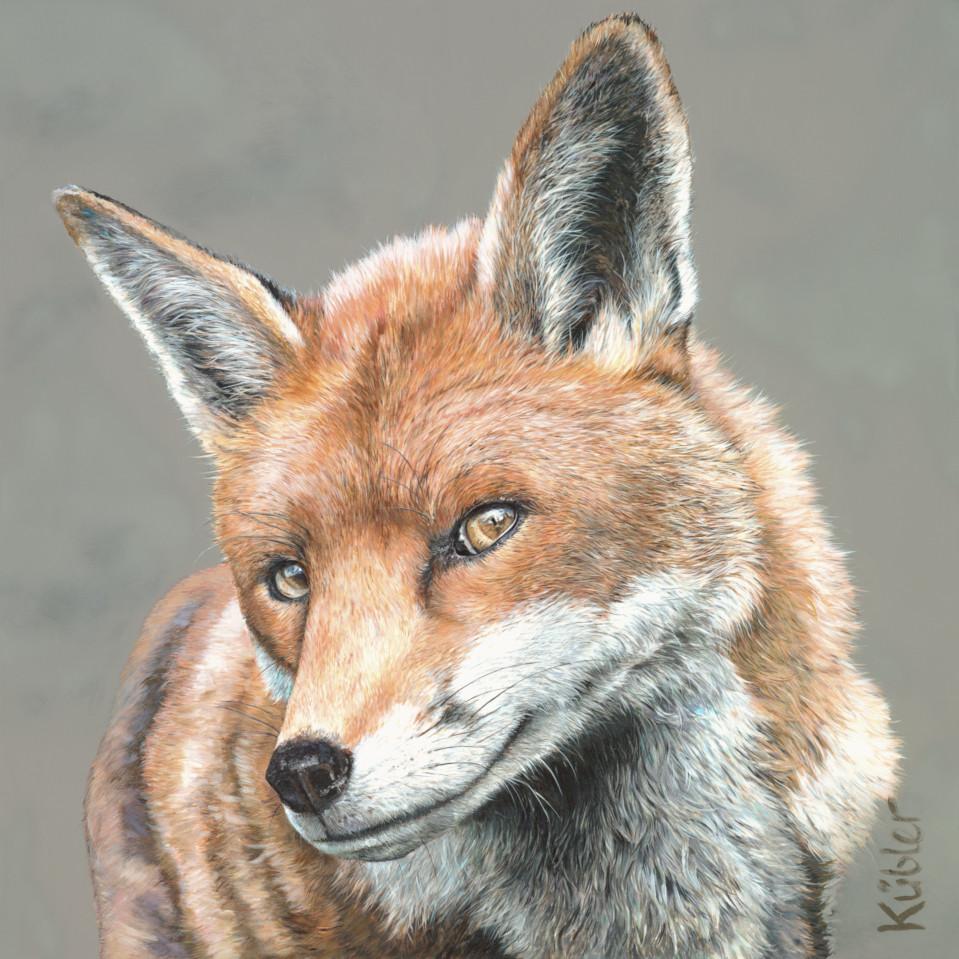 Fuchs RUFUS