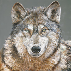WOLF LAR