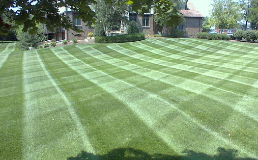 Brentwood lawn care service.jpg