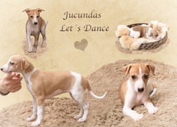 Jucundas Led's Dance