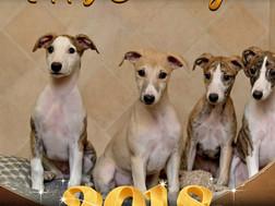 Wir wünschen allen Freunden, Verwandten und lieben Bekannten ein gesundes, glückliches Jahr 2018.