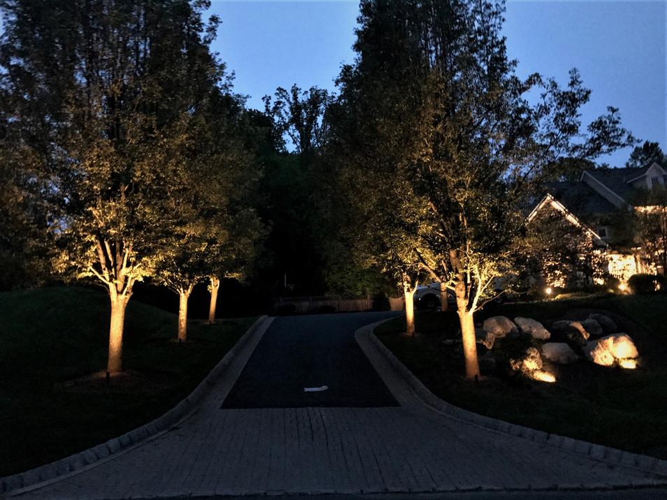 Tree Up Lighting