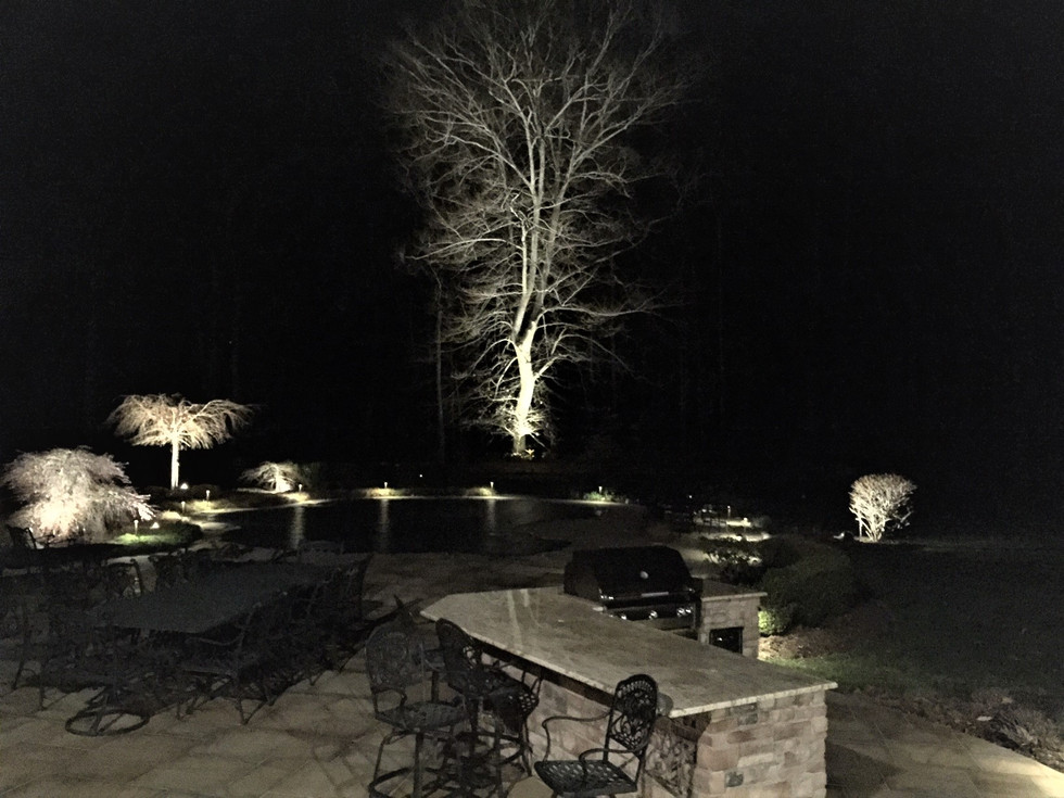 Trees Illumintated in Their Winter Form