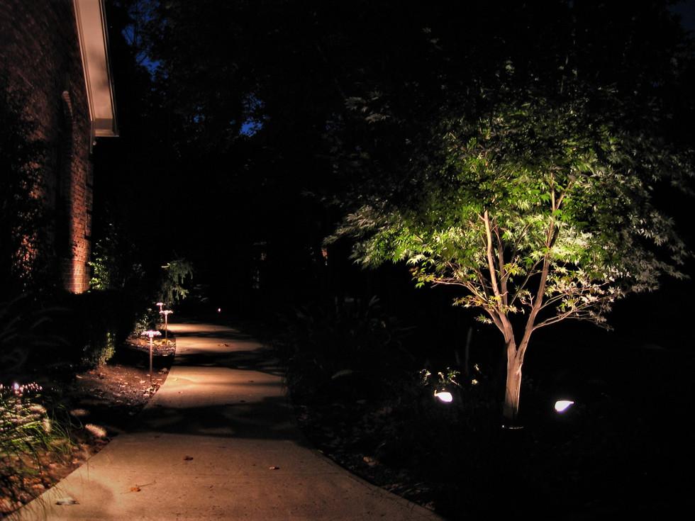 Tree & Walkway