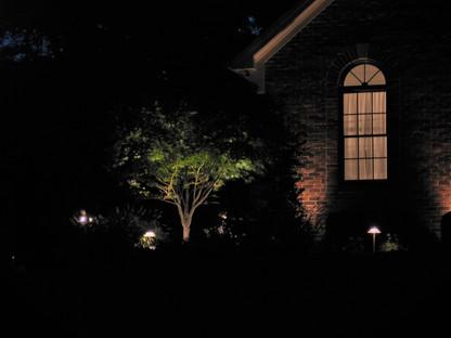Tree Up Lighting 2
