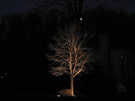 Winter Tree Up Lighting