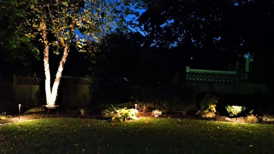 Peaceful Back Yard