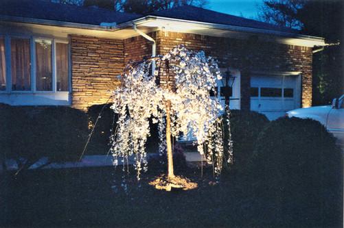 Weeping Cherry Tree Lighting