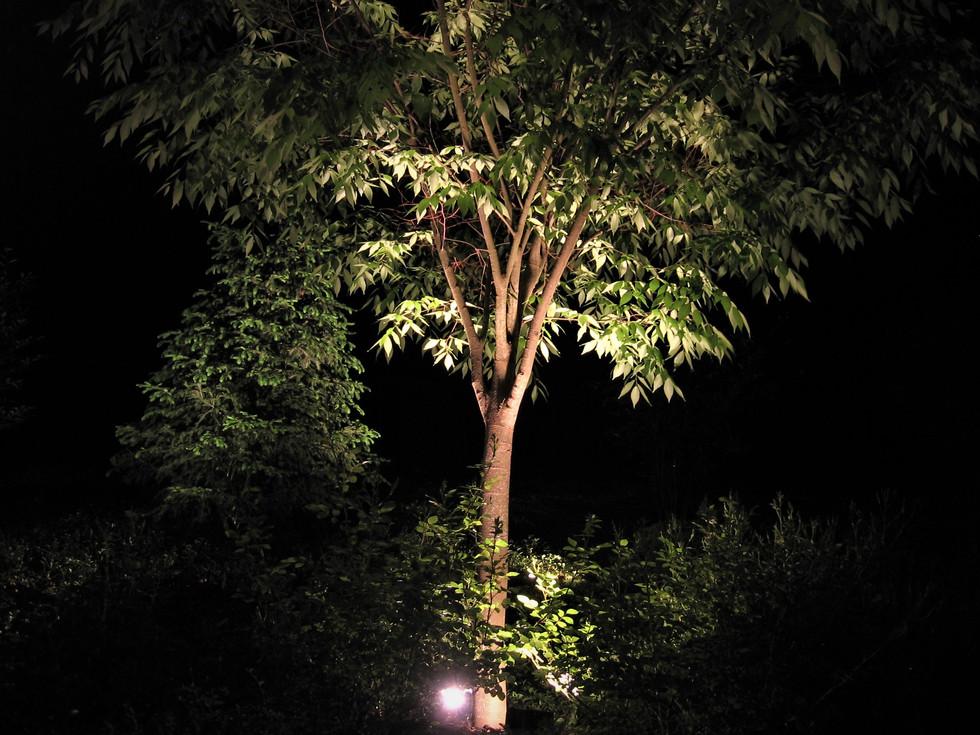 More Tree Lighting