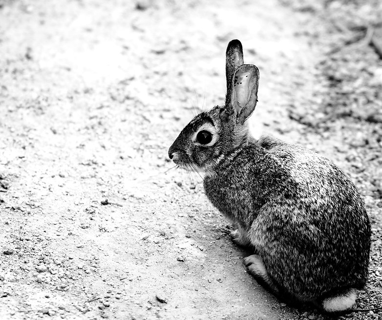 gray-rabbit-on-the-ground2_edited_edited.jpg