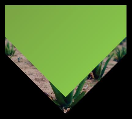Triangulo campo.png