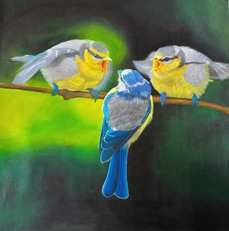 The Old World flycatchers