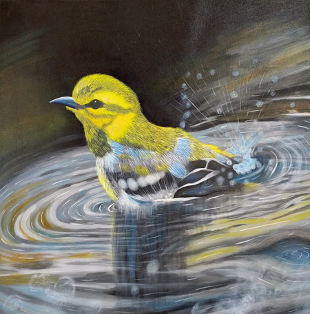 The black-throated green warbler - a small songbird