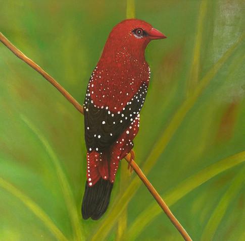 Songbird Sitting on a Branch