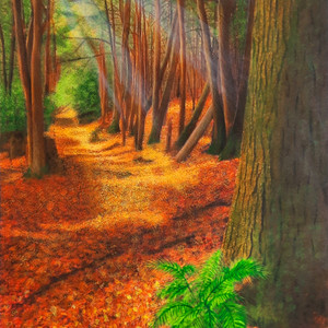 Forest : Walk in the woods