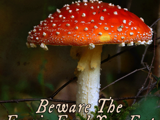 Circus Reviews - Beware the Faerie Food You Eat