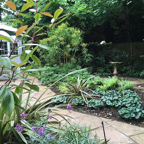 Shady garden planting