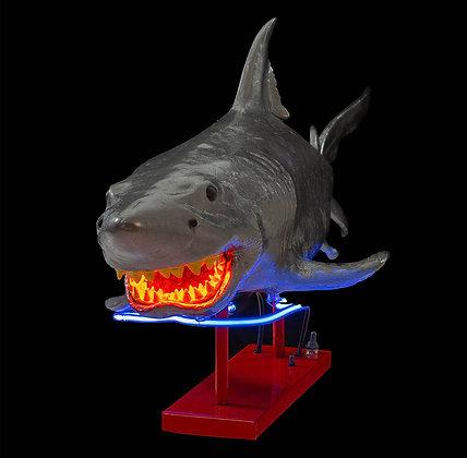 ILAN NEUWIRTH Shark, 2019