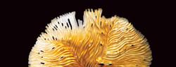 Debra-Steidel---Ocean-Amber-banner