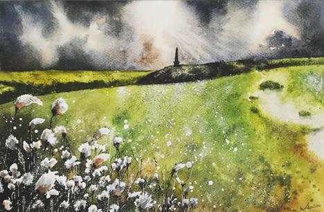'Cotton Fields'