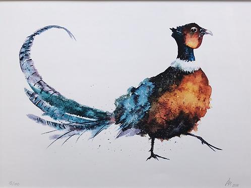 'Pheasant' Limited Edition A3 Print