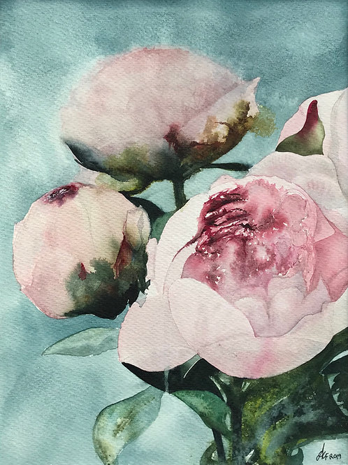 'Peonies' Limited Edition A3 Print