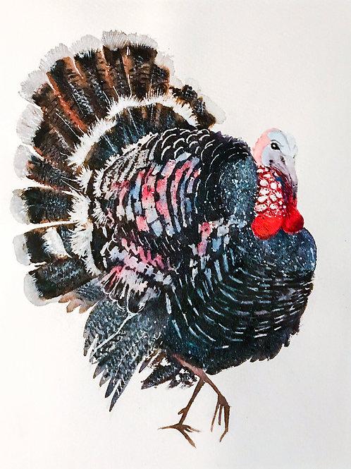 'Turkey' Limited Edition A3 Print