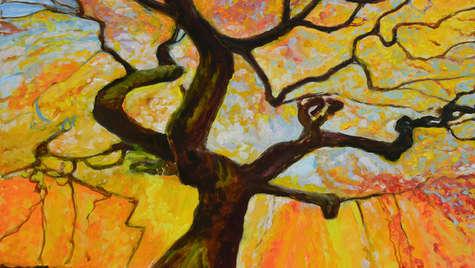 Sundance Tree