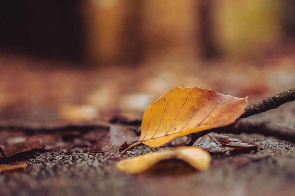 leaf autumn blurred .jpg