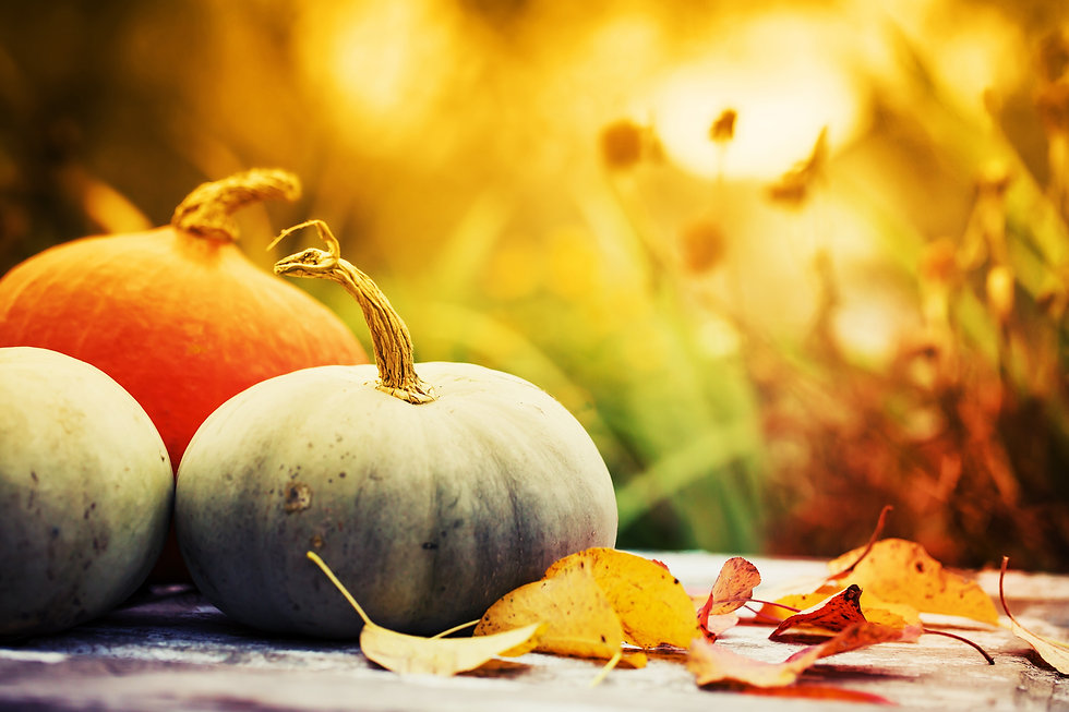 Autumn nature concept. Fall pumpkins and