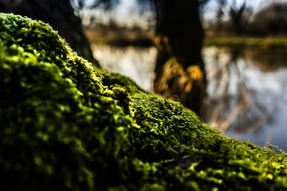 green moss shadow trees lake blurred.jpg