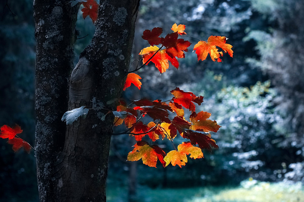 autumn-autumn-leaves-blur-close-up-58984