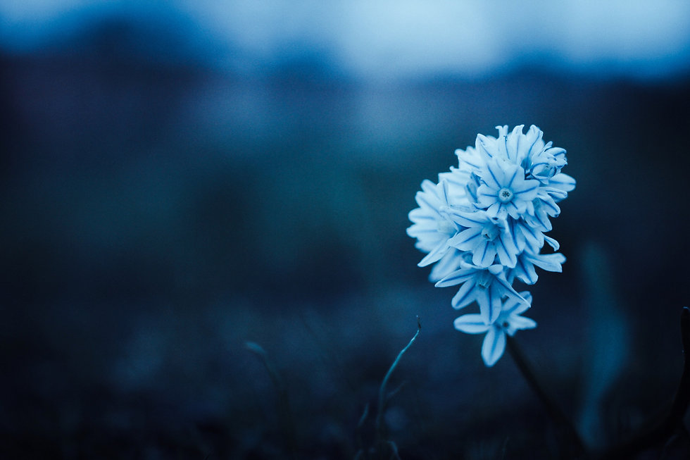 cold-dawn-blue-flower-80277.jpg