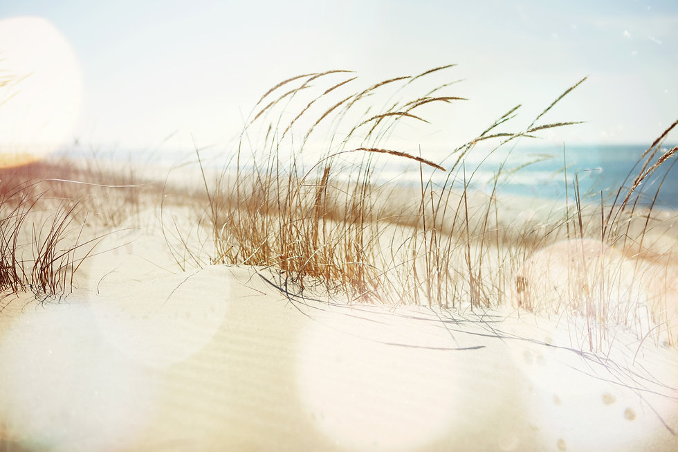 Dune Grasses on the beach.jpg