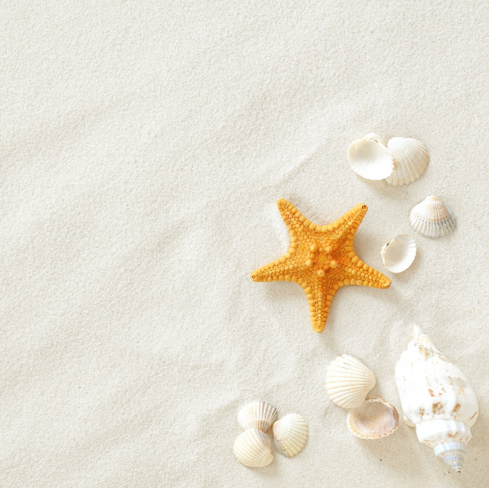 Beach with a lot of seashells and starfi