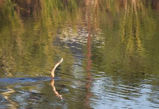 Aquatic Life Around A Dam
