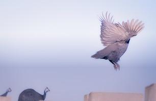 Larger Birds