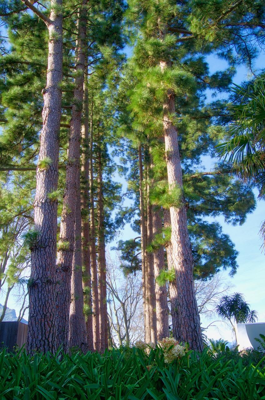 Tall Trees Delaire Graff
