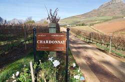 Chardonnay Delaire Graff
